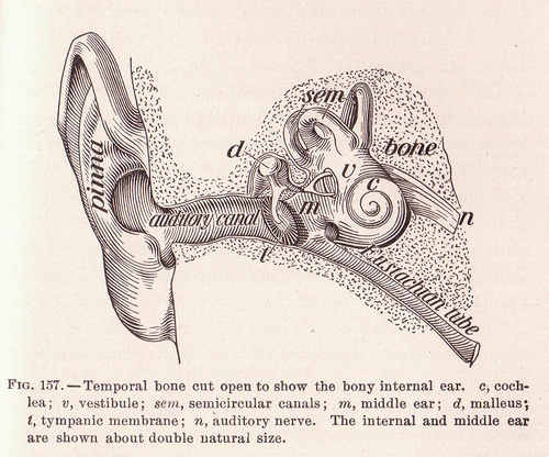 hearing with the ear